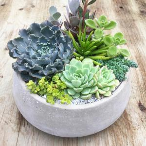 Canadian Succulents